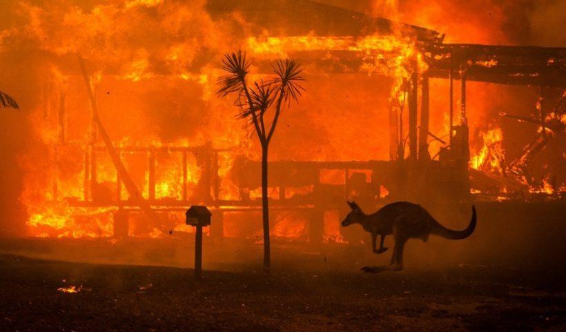 Incendie en Australie avec kangourou